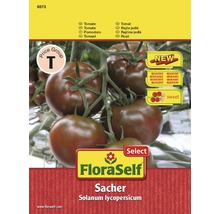 Gemüsesamen FloraSelf Select Tomate 'Sacher'