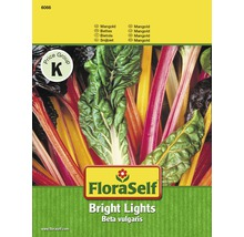 Gemüsesamen FloraSelf Mangold 'Bright Lights' bunt