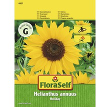 Blumensamen FloraSelf Sonnenblume 'Holiday'